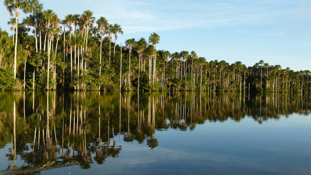 sandoval lake in puerto maldonado - inka jungle trek
