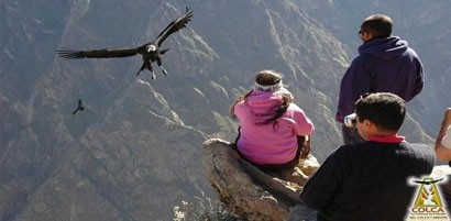 Colca Canyon Flight of Condores Arequipa inka jungle treks - city tour arequipa - inca trail machupicchu - inka jungle trek machu picchu
