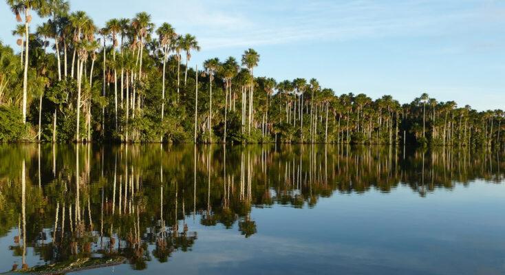 sandoval lake in puerto maldonado