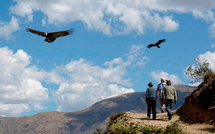 Cañon del Condor Cusco